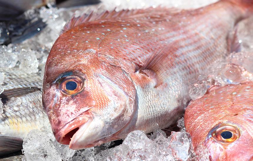 鯛(イメージ)